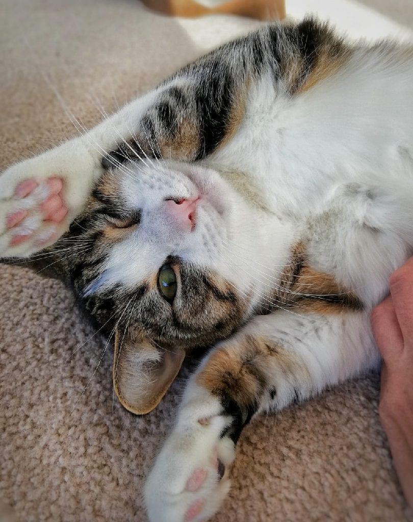 Little Paws Cat Sitting | The Generator Blog Hamilton Social Media Marketing Photo 5